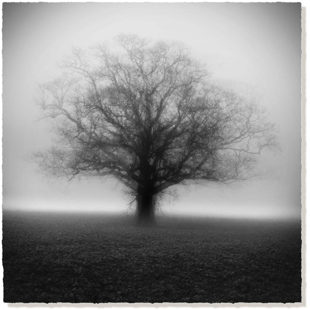 Winter Oak in the Mist - Black and White