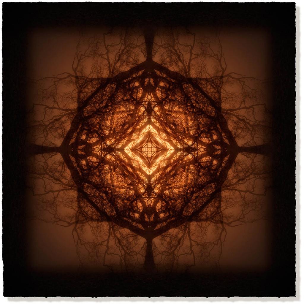 symmetree 63