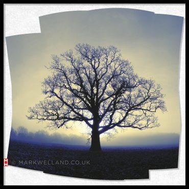 Symmetree – New Dawn