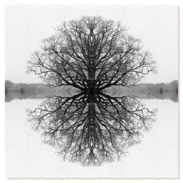 Symmetree Black on White (Day)