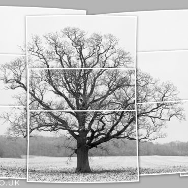 Winter Symmetrees