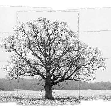 Art, Symmetrees & The Seasonal Cycle