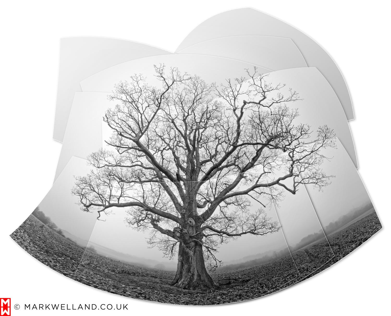 Oak Tree with Polite Notice