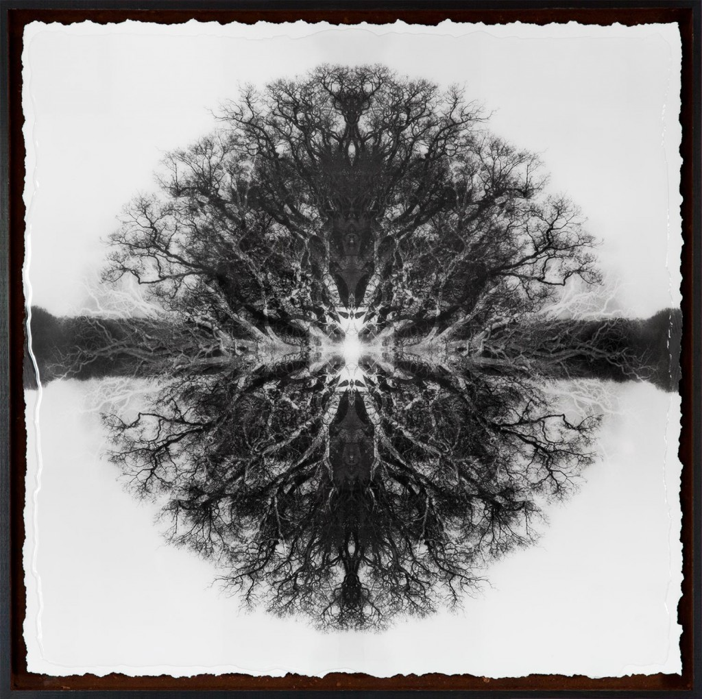 Symmetree Euclid's Oak