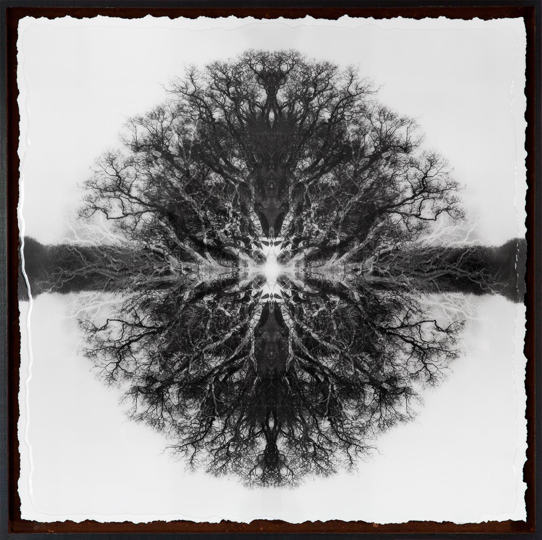 Symmetree Euclid's Oak<br/> Framed in Resin 75x75 cm - SOLD