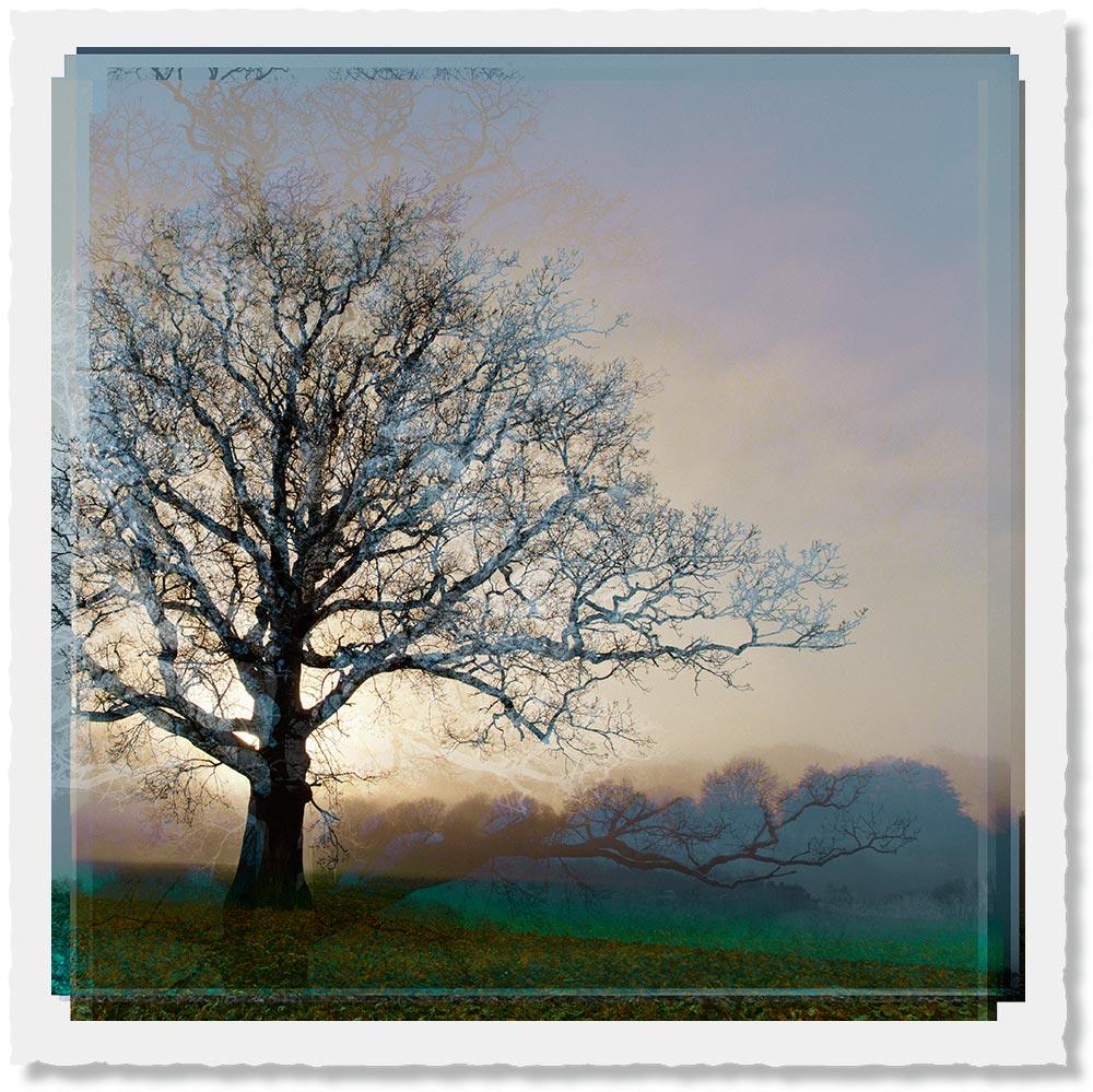 Symmetree - Rising Sun in Warm Grey