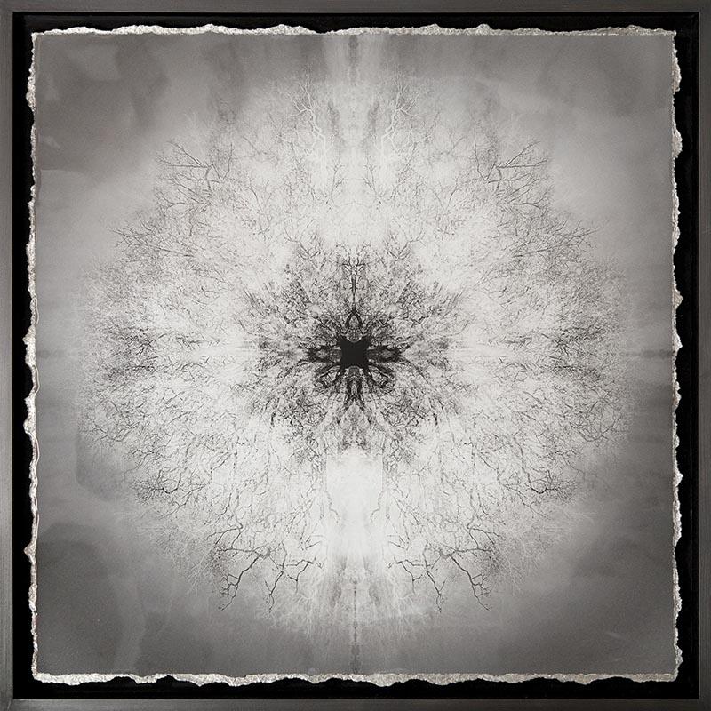SYMMETREE TESLA'S VISION-I