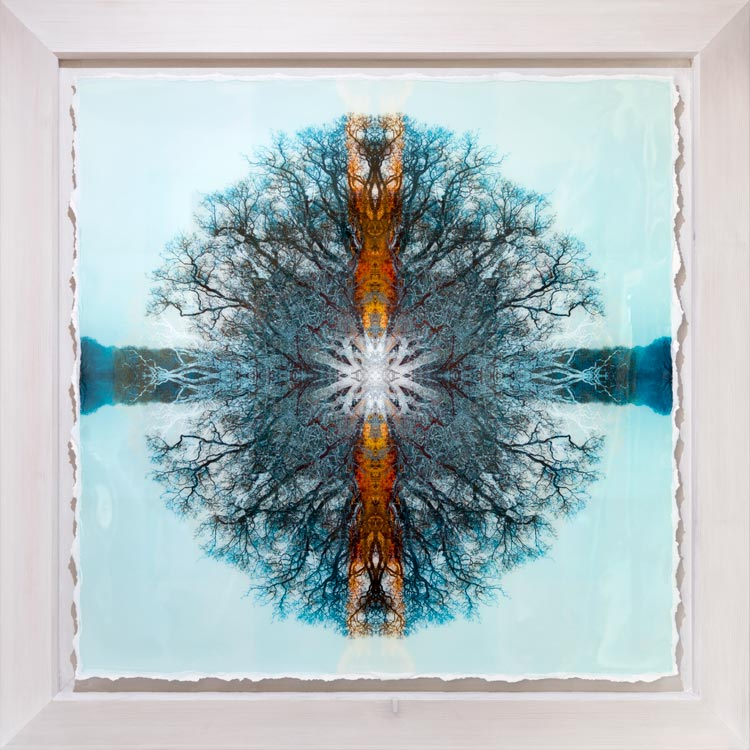 Symmetree Tripomatic Legend - I <br/>