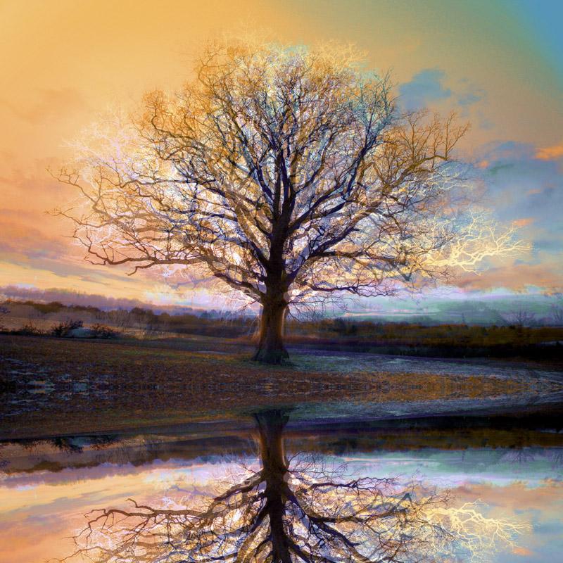 Patina 3_8 Reflected