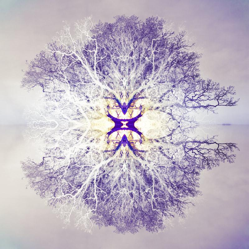 Symmetree 73 - Island Tree